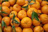mandarin