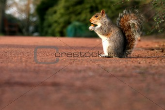 A Squirrel on the level