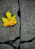 broken leaf 3