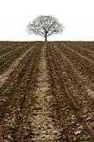 tree and farmland
