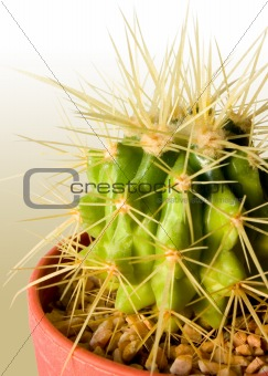 Cactus Color Background