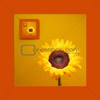 Portrait Of Sunflower
