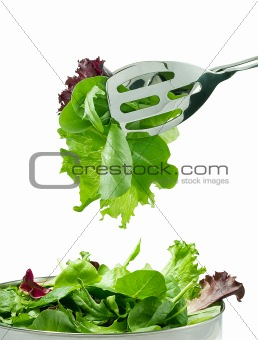 Fresh salad leaves