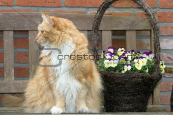 Cat and flowerbasket