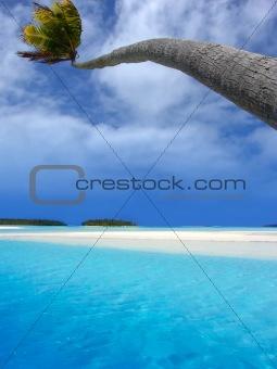 Palm Bending