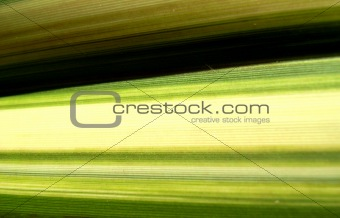 Green Line Leaf