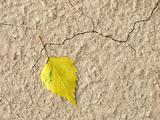 lonely yellow leaf