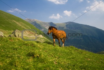 Horse up in the mountains