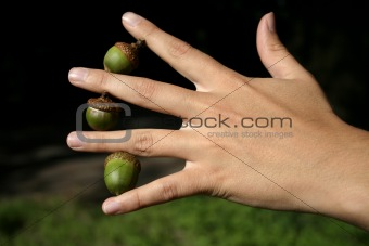 Three acorns in bewteen fingers