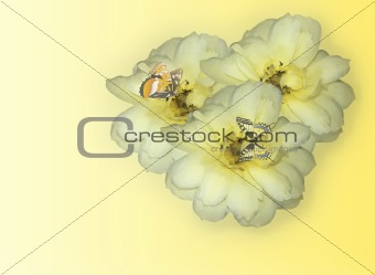 Three Yellow Rose Blossoms