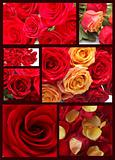 Collage of seven images with red roses