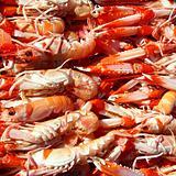 Crayfish Nephrops Norvegicus seafood market