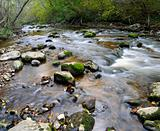 Panorama of a wild river