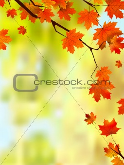 Autumn leaves border for your text.