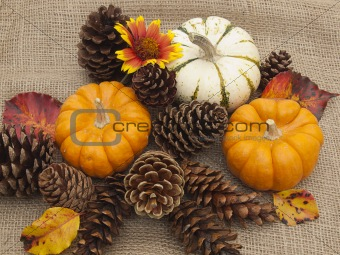 Autumn still life with pumpkins, flower and cones