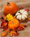 Still life of pumpkins and autumn leaves on burlap