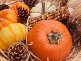 Ornamental pumpkins and cones closeup