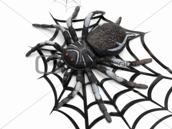 Black fake spider on web design