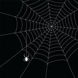 white  spider and spider web