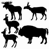 silhouettes of the wildlifes on white background