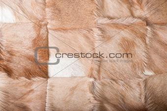 African Buck Texture