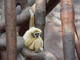 Alone monkey
