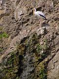 storks at the rock near waterfall