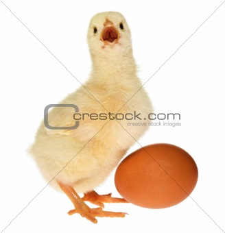 Baby Chick and Egg