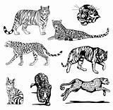 Set black silhouette wild tiger. Vector