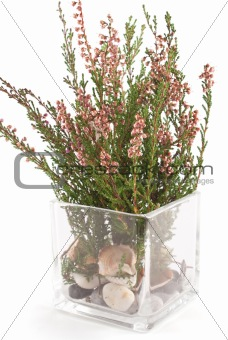 forest herbs