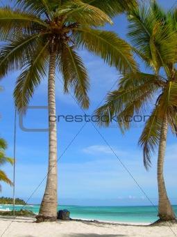 palm ad sky