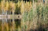 Golden Wetland