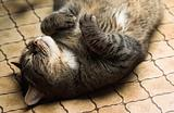 Funny cat lying