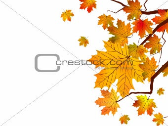 Autumn leaves isolated in white.