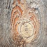 Wooden Knot Texture