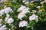 white blossoms in a flower garden