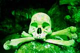 Poisonous Skull