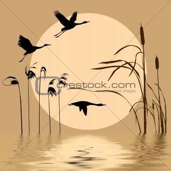 drawing flying birds on background sun