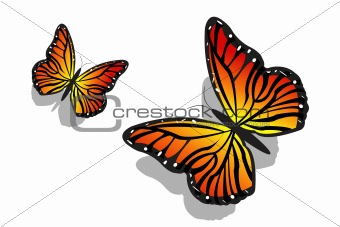 pair of butterfly