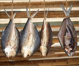 Fish Hanging to Dry