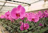 Large Orchid Nursery