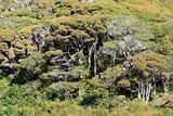 Forest - Karori Wildlife Sancutuary - New Zealand