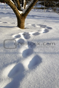 Foot steps in fresh snow