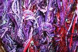Purple yarns or threads