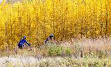 Couple mountain biking on beautiful autumn day