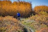 Man mountain biking uphill in fall season
