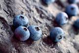 Blueberry (Northern Highbush Blueberry) fruits