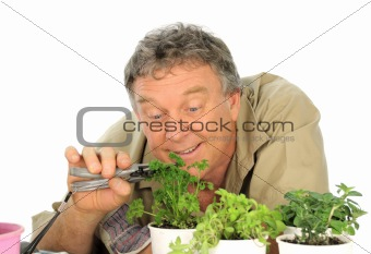Parsley Gardener