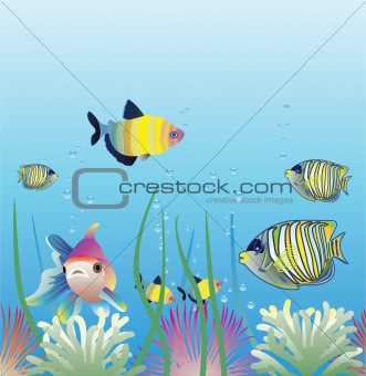 aquarium and fishes