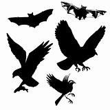 vector illustration of the birds and bats on white background